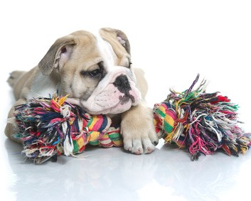 10 Dog Toys You Can Make Yourself for Little to No Money