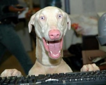 Awesome Pictures of Dogs Who Look Really Excited