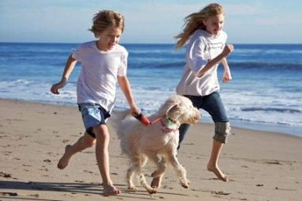 exercising-your-dog