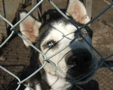 Minnesota Dog Kennel Owner Charged with Neglect