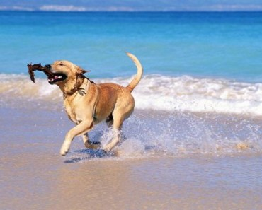 A Cute Gallery of Dogs at the Beach