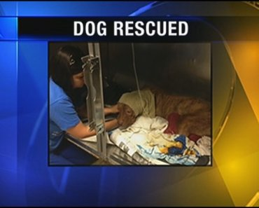 Dog With Severe Heat Stroke Finds a New Home
