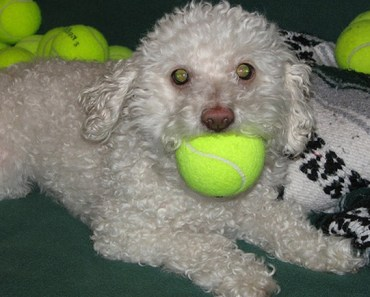 Is It Safe for Your Dog to Play with Tennis Balls?
