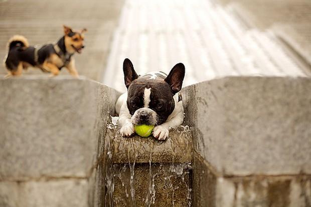 Dog_Tennis_Ball_4