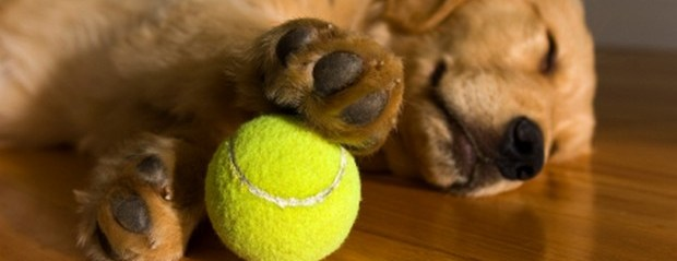 Fun Pictures of Dogs and Tennis Balls