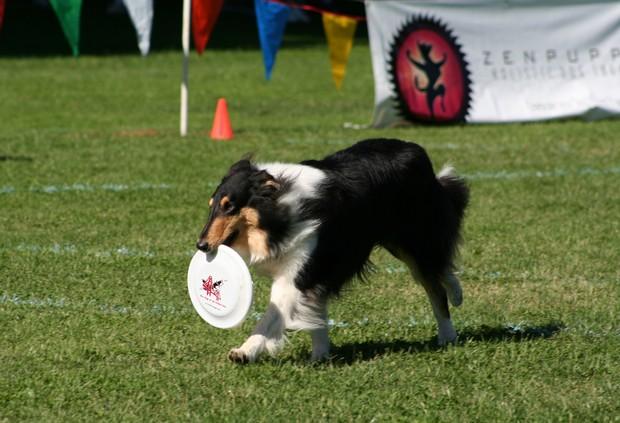 Frisbee_Dog_2