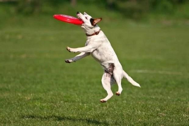 Frisbee_Dog_4