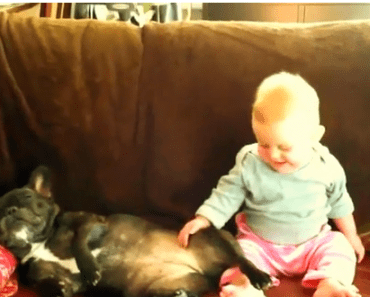 Dog Video of the Day:  Baby Amused by Dog Snoring