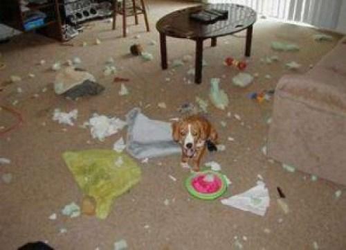 dog-mess-300x217