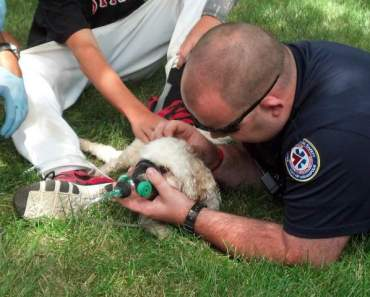 A Family Dog is Rescued from a Housefire in Indianapolis