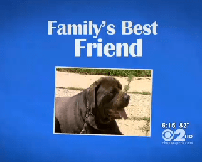 Dog is Credited with Saving Woman and Grandson from Fire