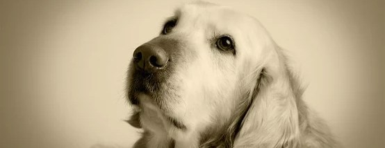A Collection of Great Quotes about Dogs