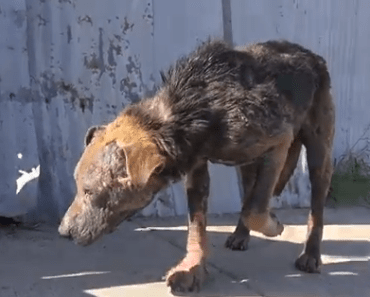 Dog Video of the Day:  Inspirational Homeless Dog Transformation