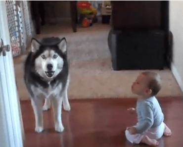 Dog Video of the Day:  Dog Imitates Baby