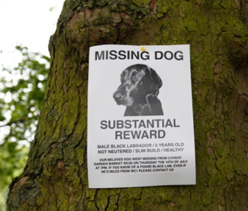 A missing dog poster in a park in London, England, U.K.. Image shot 07/2011. Exact date unknown.