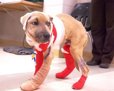 A Dog is Recovering after Nearly Being Dragged to Death