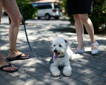 Town in Spain Sends Dog Poop Back to Owners