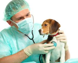 Canine Heart Disease:  Signs and Susceptability