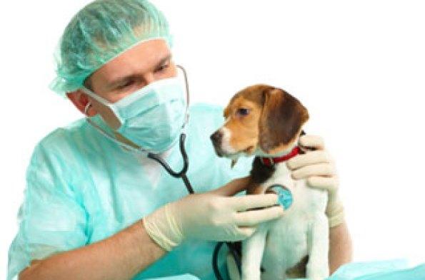 7.14dog-heart-disease