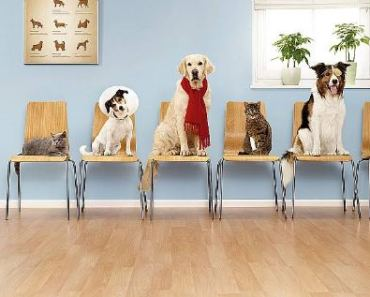 How to Manage Your Dog's Health Care