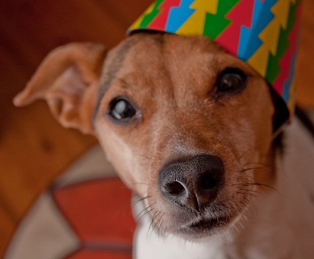 Party_Dog_11