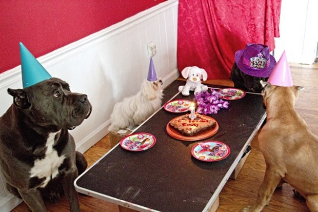 Party_Dog_12