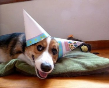 Dogs Who are the Life of the Party