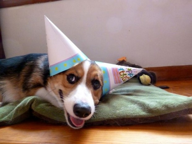 Party_Dog_2