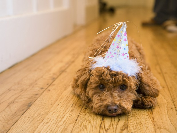 Dog wearing party hat, lying on hardwood floor