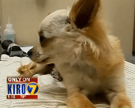 A Dog Survives After Being Thrown Out of a Window