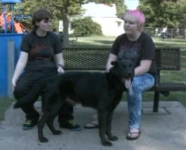 Dog Rescued After Owners Post Horrifying Craigslist Ad