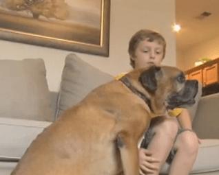 Boy Raises Money to Buy his Dog a Wheelchair
