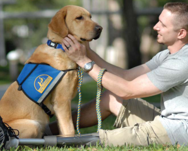 Canine Companions Launches Campaign to End Fake Service Dog Products
