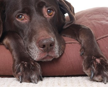 Can a Pain Management Center Help Your Dog?