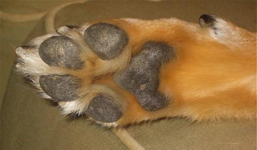 paw-of-dog