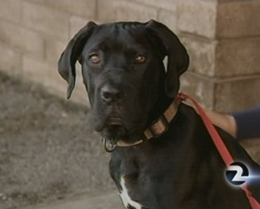 Dog Rescued from San Francisco Bay is in Good Health