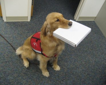 Service Puppies are Helping Children with Autism