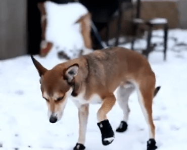 A Funny Compilation of Dogs Wearing Boots