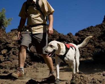Healthy Hiking with Your Dog