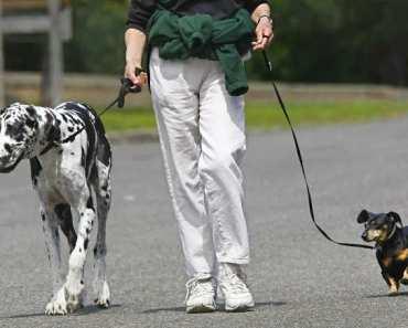 The Joys of Walking Your Dog
