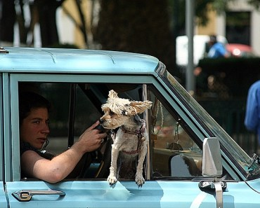 Making Car Travel Easy on Your Dog