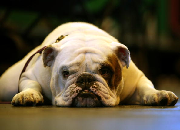 Dogs And Owners Gather For 2009 Crufts Dog Show