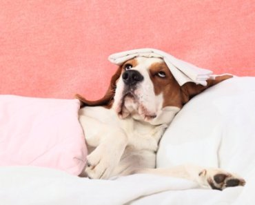 What is Hypothyroidism in Dogs and How Can It Be Treated?