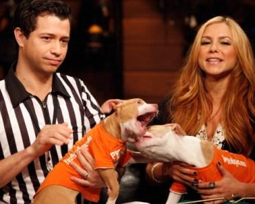Puppy Bowl Flashbacks: Kitten Halftime Show