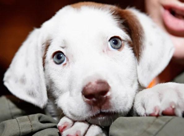 North Shore Animal League America's Tour For Life Pet Adoption Event