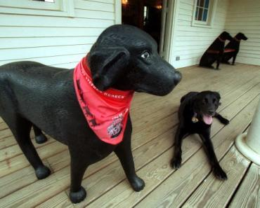 Wait Until You Read What This Amazing Blind Dog Does