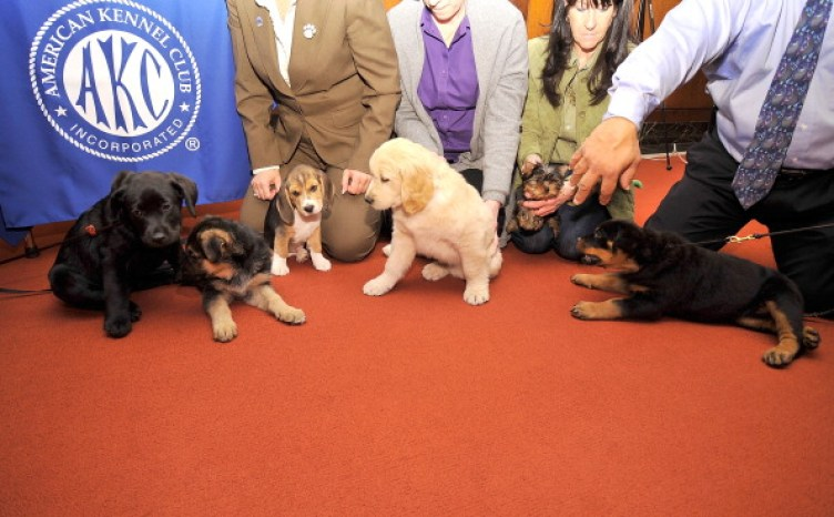 Cute dogs at AKC club