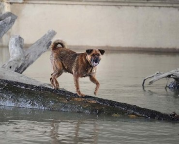 Dog Rescued From White River Log By Indianapolis Fire Department