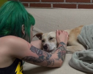 Ava the Dog Undergoes Amazing Transformation During Her Rescue