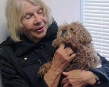 Blind, Deaf Dog Rescued After Getting Stuck in Sinkhole
